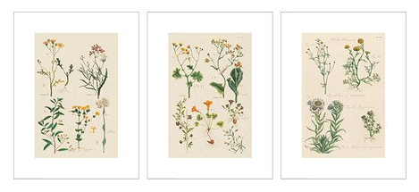 boxwoodclippings_botanical posters