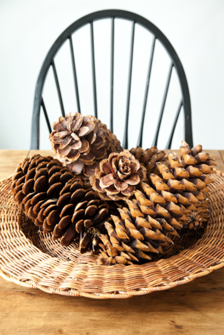 boxwood clippings_giant pinecones
