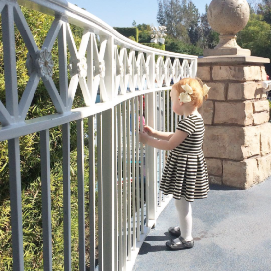 boxwood clippings | disneyland tips with babies